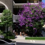 Architectual rendering of proposed 'Oro' streetscape